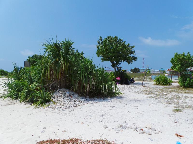Local trees on the beach-Naifaru Nafaa Inn