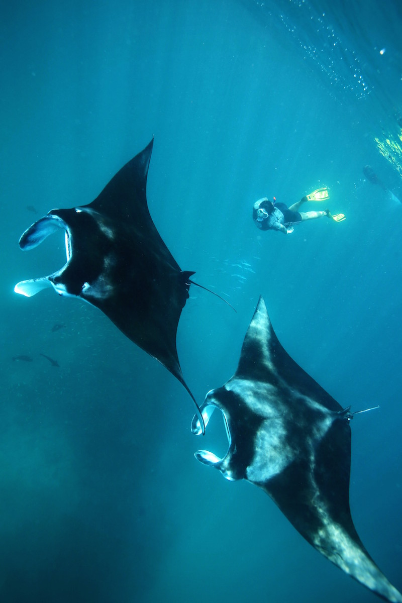 Manta Ray pair and snorkeller at Hanifaru Bay, Anantara Kihavah Villa