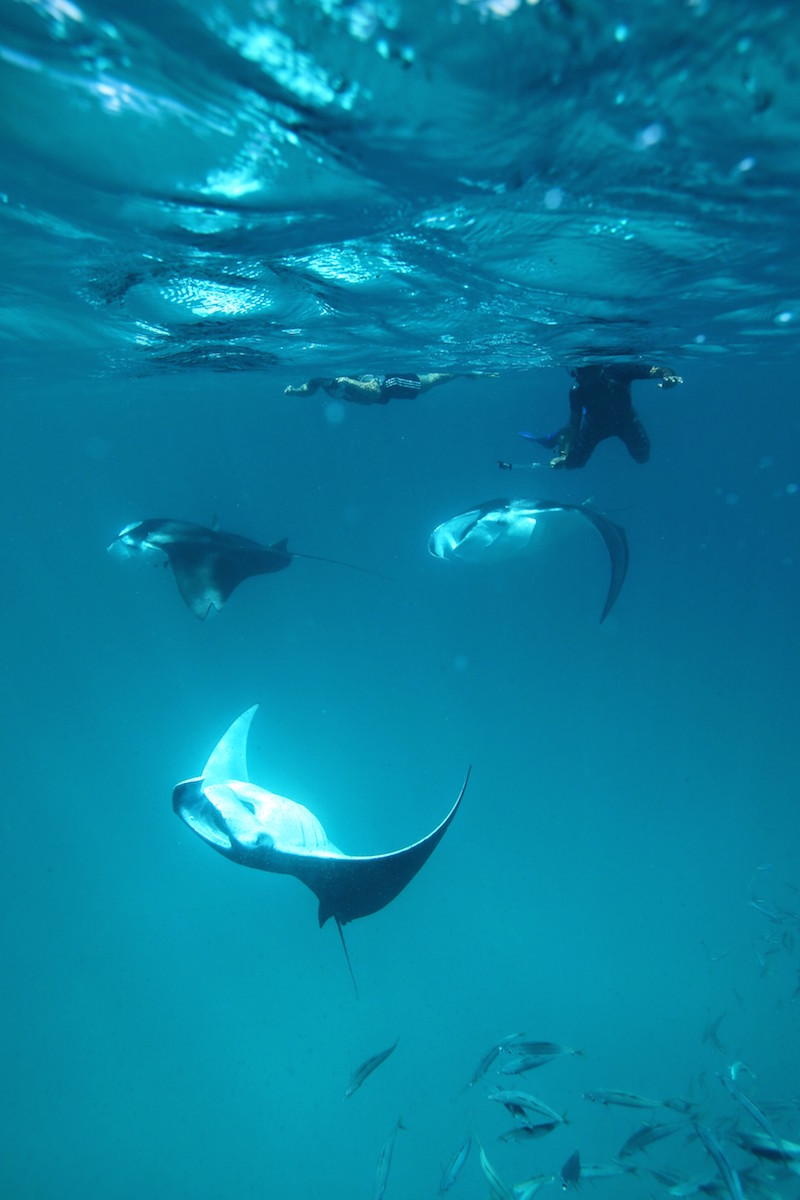 Manta Rays and snorkelling at Hanifaru Bay, Anantara Kihavah Villa