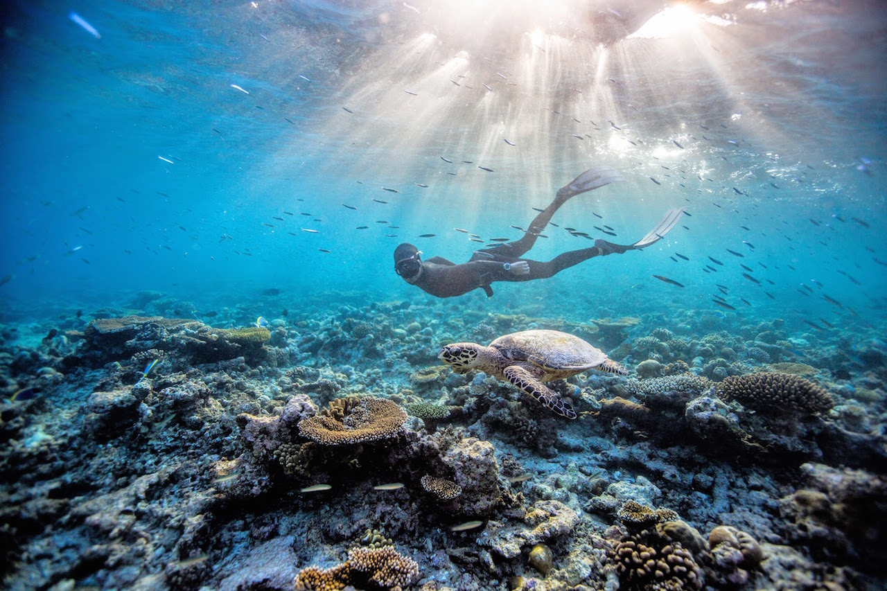 Eusebio Saenz de Santamaria enjoying freediving with turtle in the house reef