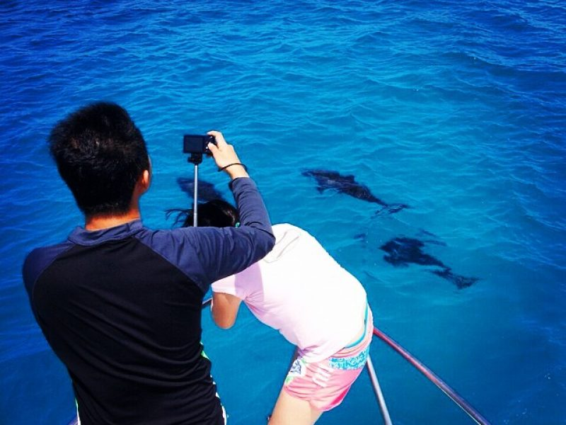 Dolphin watching, Crystal Sands