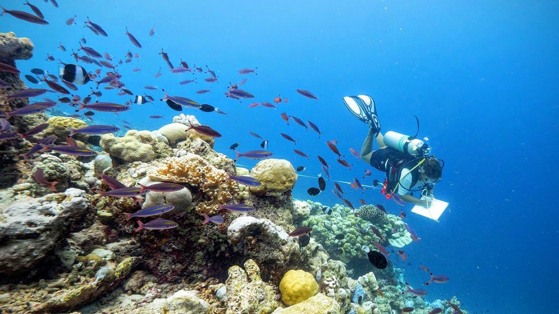 Coral-Reef-CPR-Scientist-Georgia-Coward-conducting-fish-transacts-in-South-Malé-Atoll
