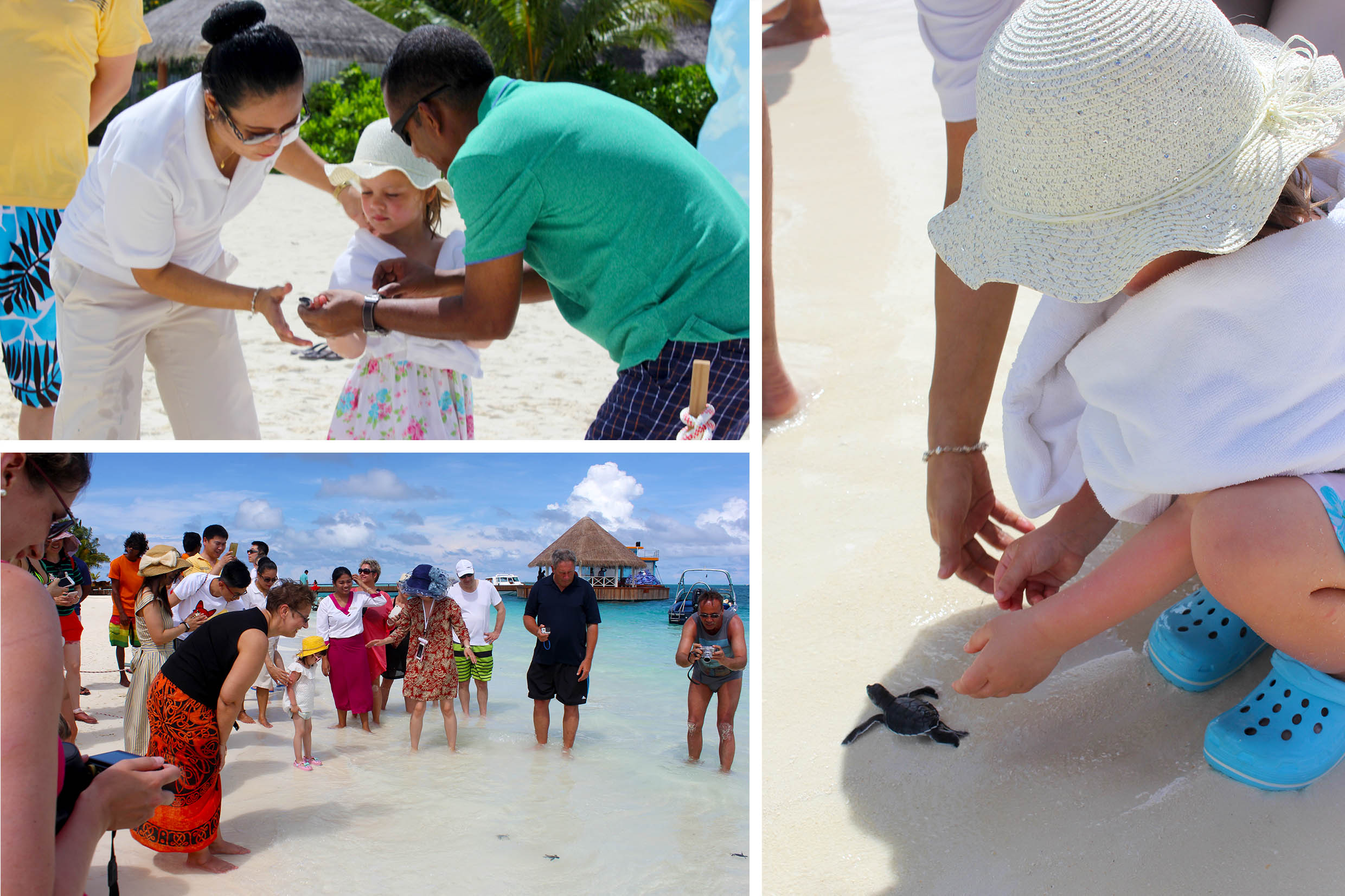 Guests joining the team to SAVE THE SEA TURTLE - Sun Aqua Vilu Reef