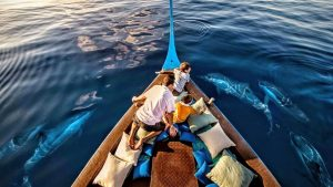 Dolphin Cruise, Four Seasons Resort Maldives at Kuda Huraa