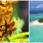 The Kanuhura Maldives Orchid flowers again after two-year break
